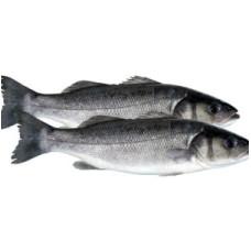 Lup de mare (levrek) eviscerat 300/400